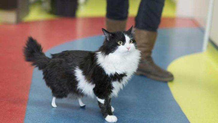 """Първата """"бионик"""" котка в България"""