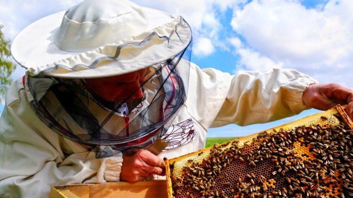 Пчеларите с 5 млн.лв. годишни помощи до 2020 г.