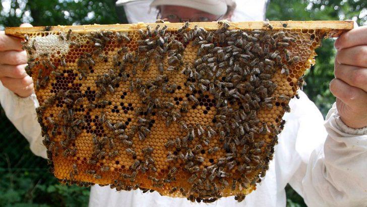 Започва подписването на договори за кошери по пчеларската програма 2017-2019 г.