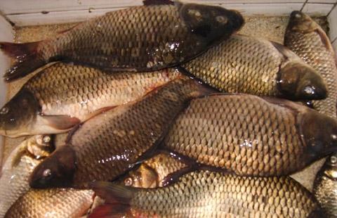 """Незаконно уловена риба бе върната във водите на язовир """"Стамболийски"""""""