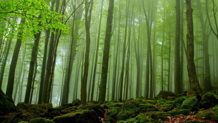 Организацията на Световният фонд за дивата природа WWF предлага на гражданите да помогнат за спирането на незаконната сеч