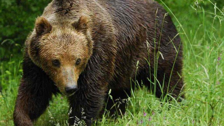Ако срещнете мечка в Балкана…!?