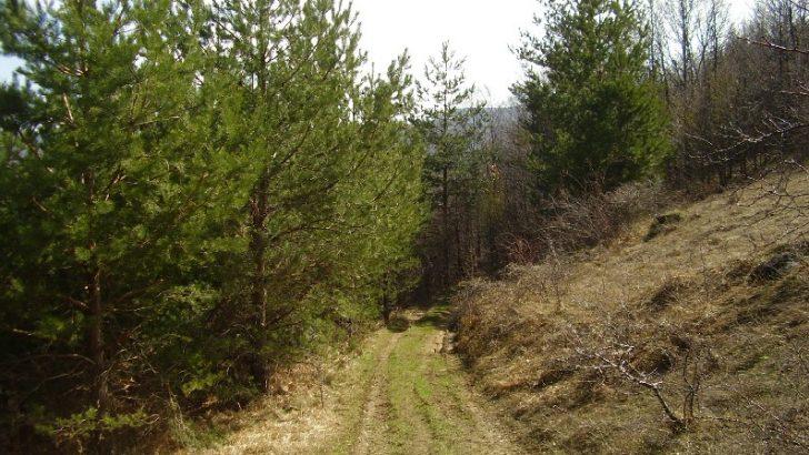 Продължават проверките в горите