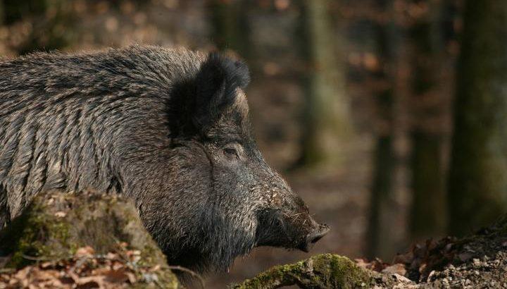 Ловците – безупречни в началото на сезона, в горите нарушенията не секват
