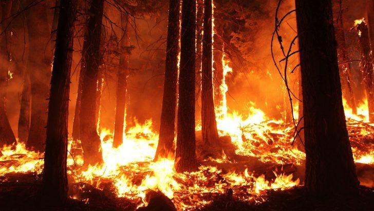 Опазихме се от горски пожари в жегите