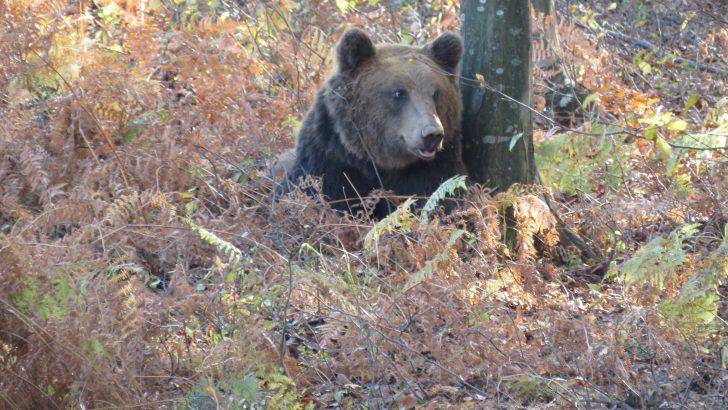 """Още един 200 килограмов мечок стана """"научен работник"""""""