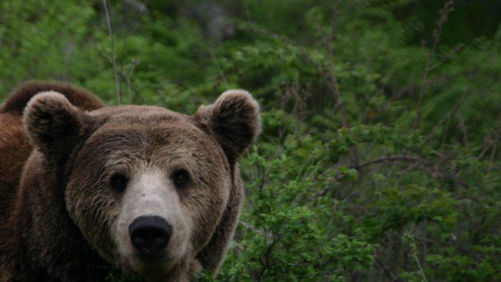Затвор грози убиеца на тригодишния мечок Пламен