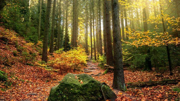 """""""Централен Балкан"""" ще получи официално диплом на ЮНЕСКО за биосферен парк"""