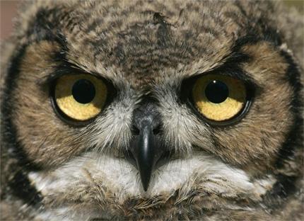 Броят совите в Балкана