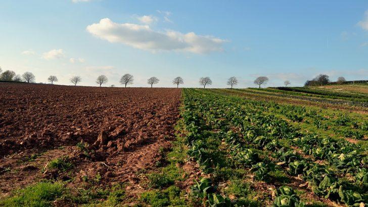 """Областна дирекция """"Земеделие"""" кани на среща земеделски стопани от региона"""