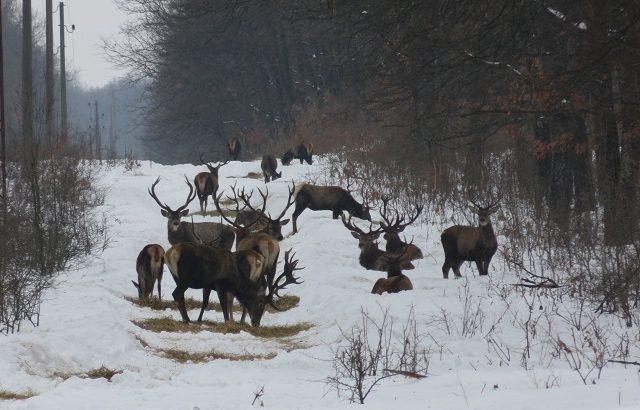 Призив: Ловците да положат грижи за дивеча