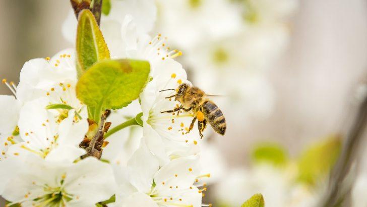 Животни и растения са изложени на риск от затоплянето на климата
