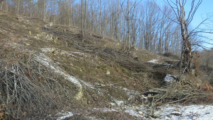 Повече от 600 кубика дървесина изсекли бракониери от началото на годината на територията на Северноцентралното държавно предприятие