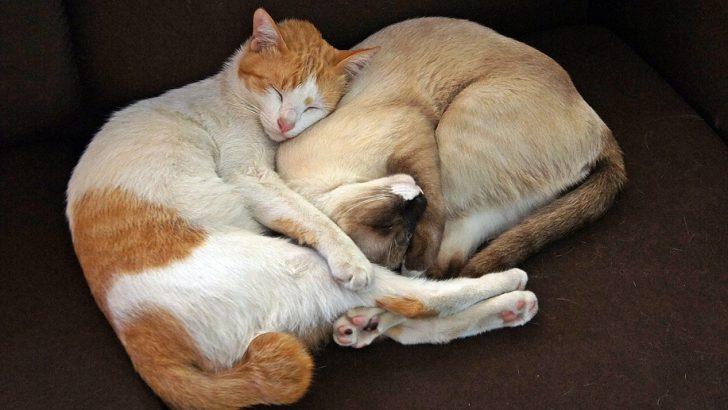 И безстопанствените котки са грижа на общината
