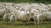 """ДФ """"Земеделие"""" приема заявления за компенсаторни плащания на животновъдите"""