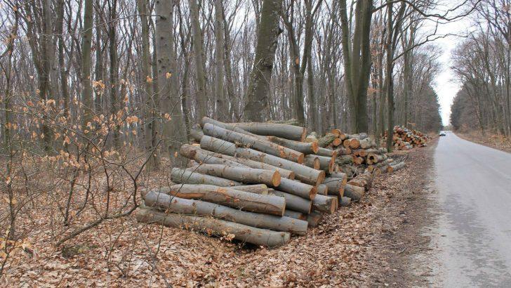 Проверки в горите в активния сезон за дърводобив