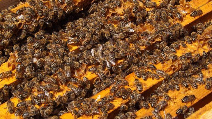 """Фонд """"Земеделие"""" подкрепя развитието на пчеларството"""