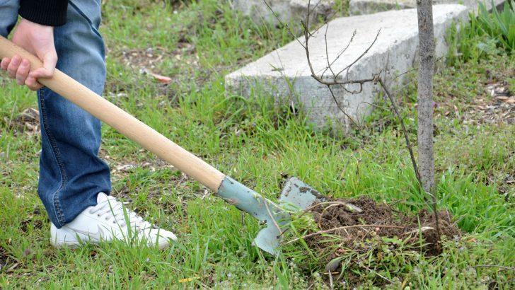 Повече от 30 декара нови гори край Севлиево бяха залесени миналата година