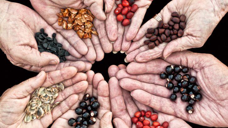 Севлиево става дом на семената на 20 април