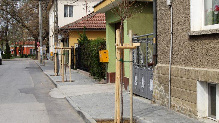 Община Севлиево засади нови 90 дръвчета