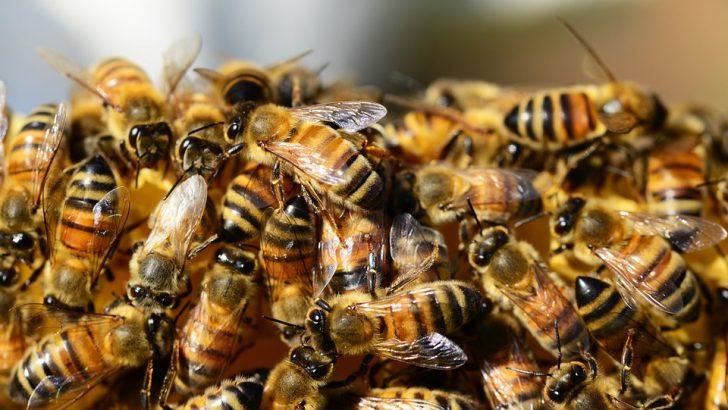 Батошево е най-гостоприемно за пчелите
