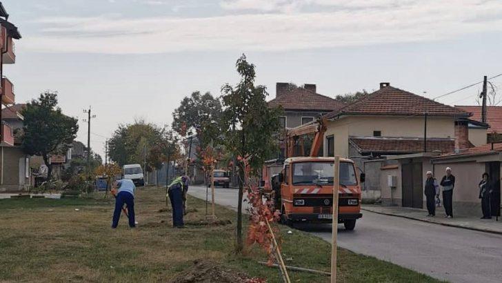 Още 20 дръвчета засадиха тази седмица в Севлиево