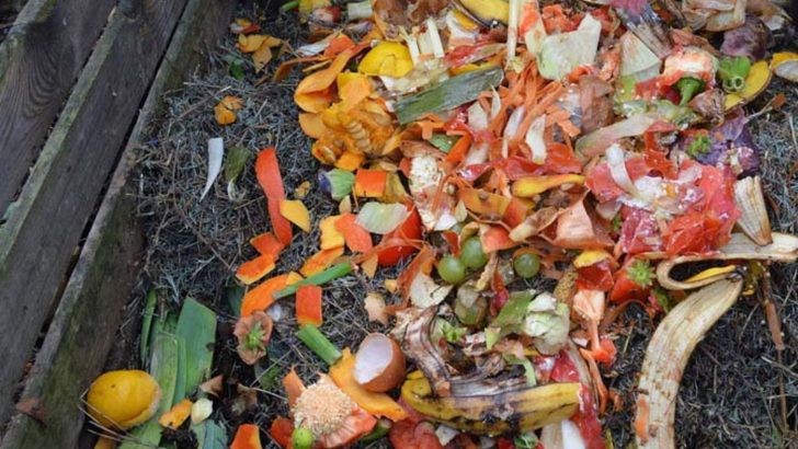Компостът – сместа, с която заедно можем да подобрим почвите