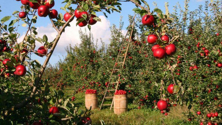 Четири пъти повече средства за подпомагане на родното производство на плодове и зеленчуци