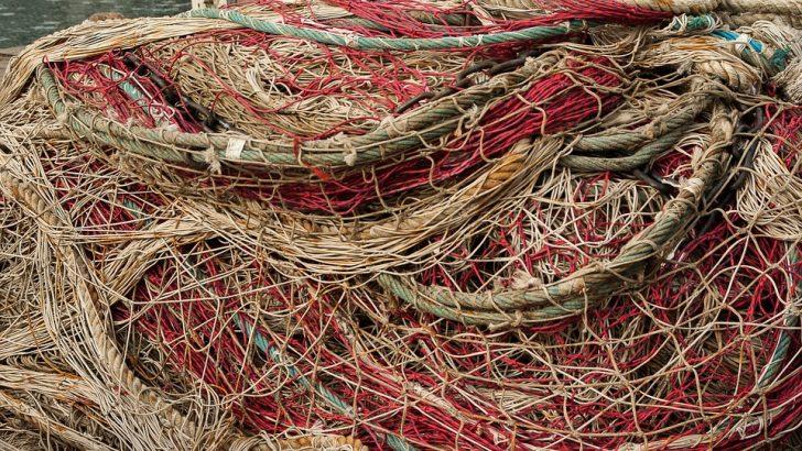 Четири акта са съставени на бракониер заради незаконен улов на риба