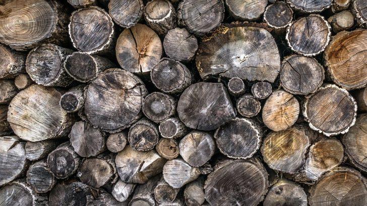 В село Столът разкриха бракониерски добив и продажба на дървесина
