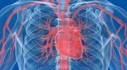 Сърдечно-съдовият хирург д-р Пейо Мишев ще преглежда на 19 юни