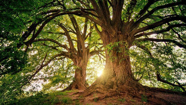 Севлиeво, една от трите общини, пример за опазване на старите гори