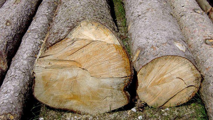 Товарен автомобил и дървесината в него бяха конфискувани в с. Шумата