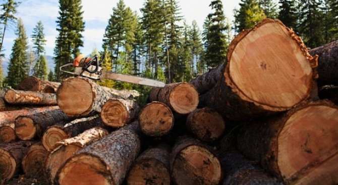 Сериозни проверки от началото на февруари в дърводобива