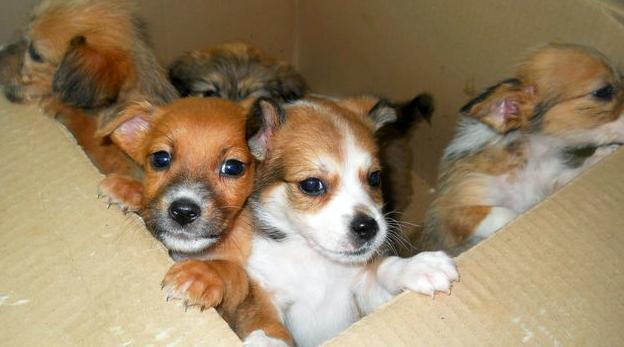 Над 100 кучета са осиновени за една година от приюта в Севлиево