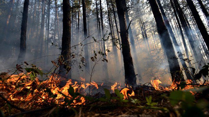8 пожара унищожили 852 дка държавни гори в региона