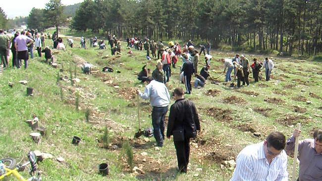 31 декара новозалесени територии в севлиевско тази пролет