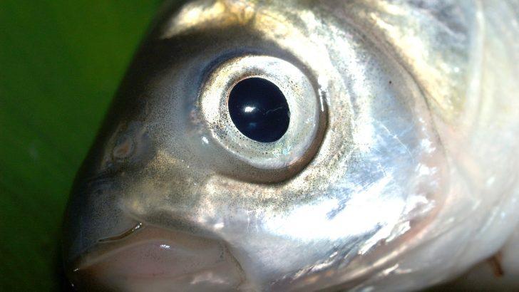 Маловодието доведе до измиране на риба, проверката обаче не я намери в реката до Горна Росица
