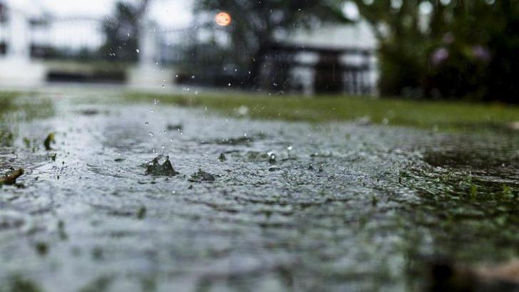 Дъждът събори две дървета в Севлиево