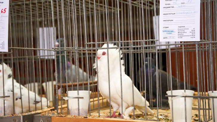 """Над 200 птици от 42 породи показват на изложба в СЗ """"Дан Колов"""""""