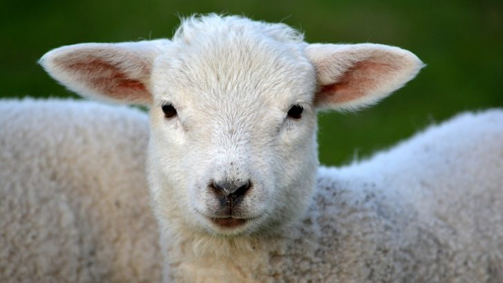 Нова Наредба определя местата за отглеждане на селскостопански животни